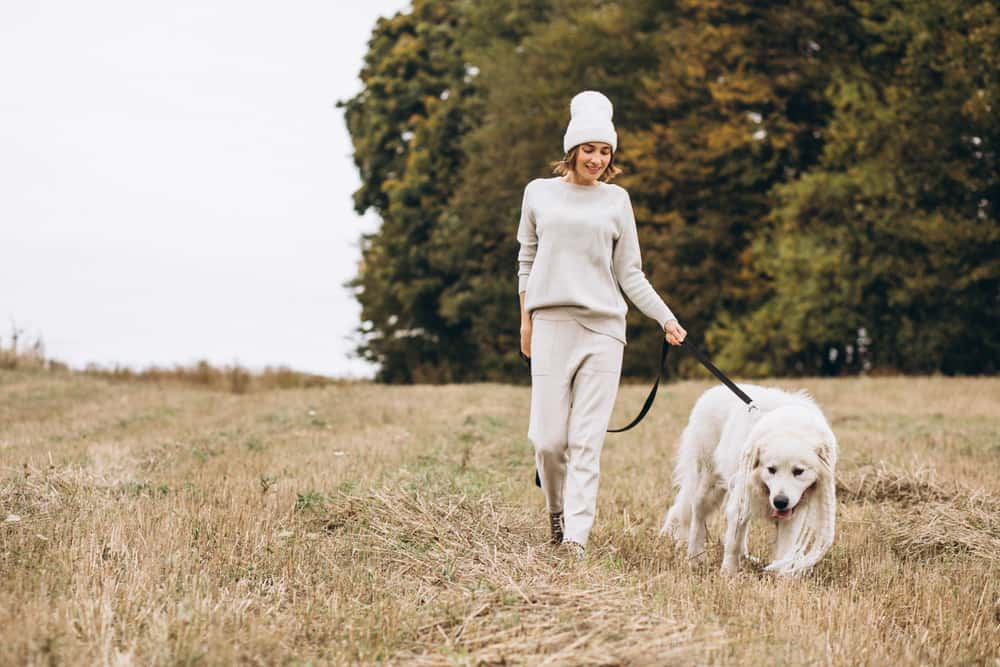 Si no te gusta ejercitar una biena forma de perder calorías es pasear a tu mascota