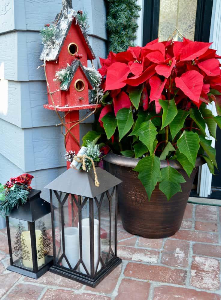 Las flores de Navidad son ideales para dar la bienvenida a diario al hogar. Colócalas cerca de los faroles para crear un rincón lleno de magia.